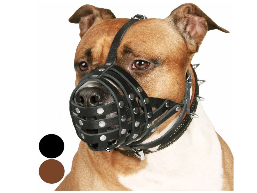 CollarDirect Pitbull Muzzle