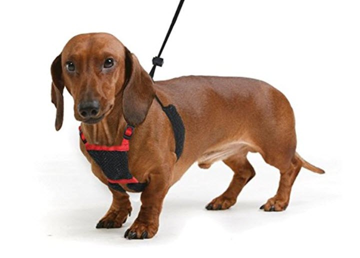 Sporn Dog Harness - No Pull and No Choke Humane Design