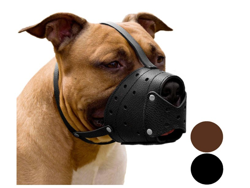 CollarDirect Pitbull Terrier Secure