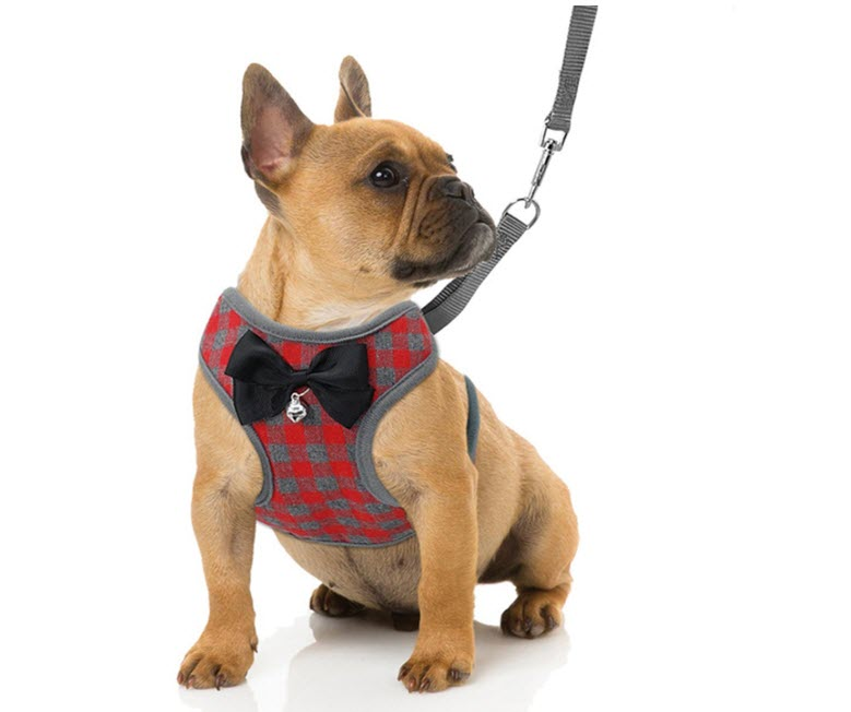 RYPET Small Harness and Leash Set