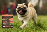 Top 10 Best Chicken Free Dog Food for 2020 Reviews
