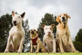 Top 10 Best Dog Training Books for 2019 Reviews