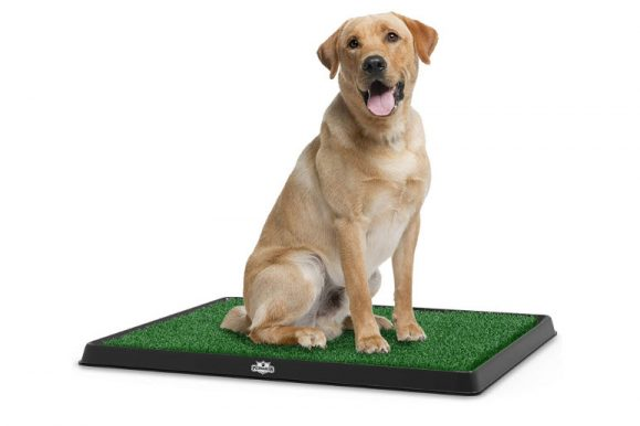 Best Indoor Dog Potty 2019