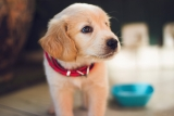 PET CARE GIVERS: A HOME AWAY FROM HOME