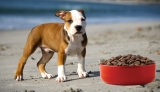 Top 10 Best Dog Food for Pitbulls 2020 Reviews