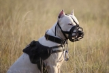 Top 10 Best Pitbull Dog Muzzles for 2020 Reviews