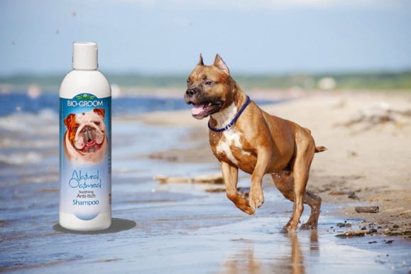 Top 10 Best Pitbull Dog Shampoo for 2019 Reviews